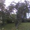 zarodenie-stromu-po-vykonani-rezu.jpg