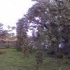 zarodenie-stromu-po-vykonani-rezu-2.jpg